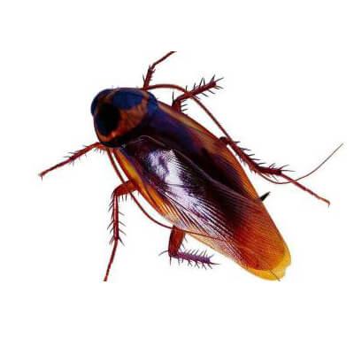 除甲醛价格 高水平的蟑螂防治就在一丁安环境工程