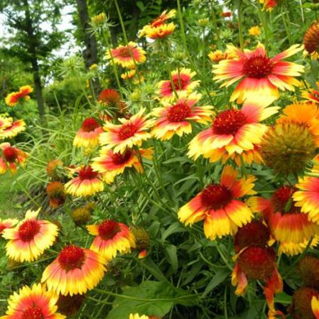 如何正确为宿根花卉浇水