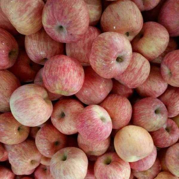 2001苹果