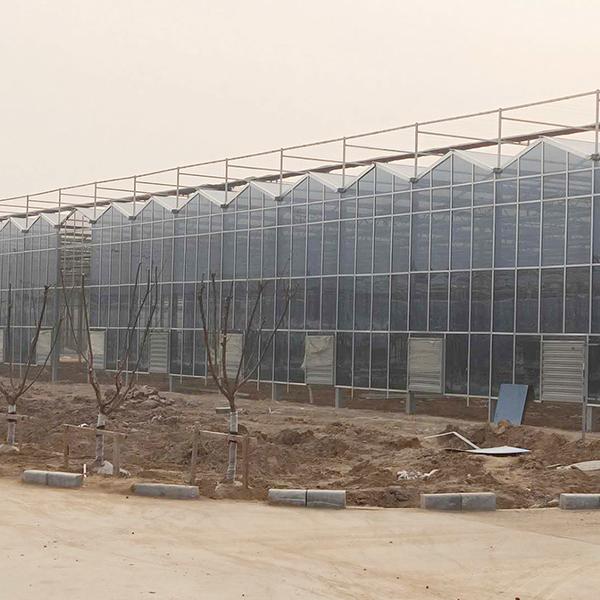 阳光板玻璃温室公司