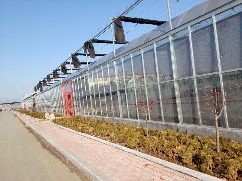 高质量的连栋温室建设|潍坊连栋温室
