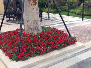 安徽宿根绿化花卉工程案例