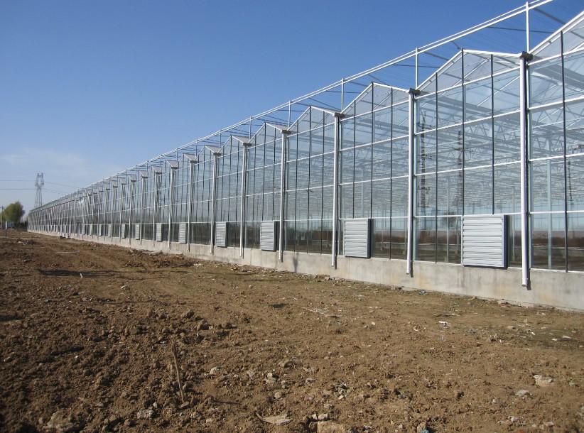 宁夏智能温室建设,质量好的温室大棚推荐