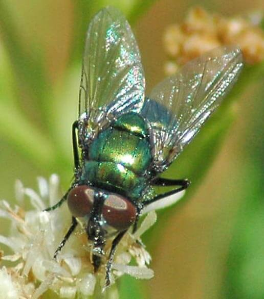 廈門白蟻預防哪家好 想找有口碑的蒼蠅防治,就來一丁安環境工程