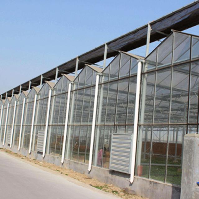 吉林连栋温室种植基地