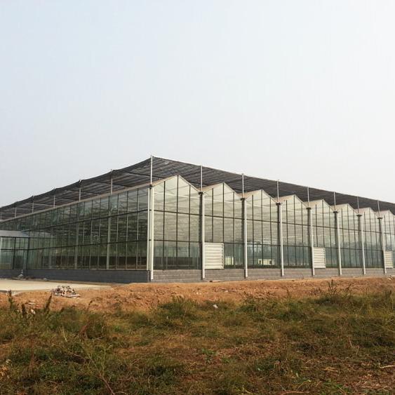 连栋塑料温室案例
