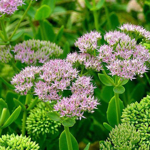 江苏绿化花卉种植基地