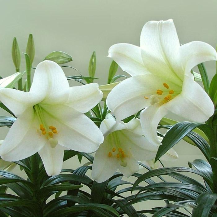 绿化花卉种植基地