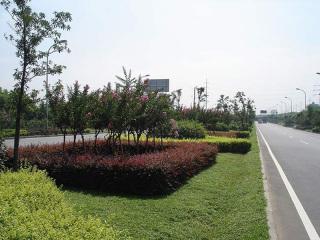 天津绿化苗木工程案例