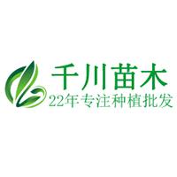 莒南千川苗木专业合作社