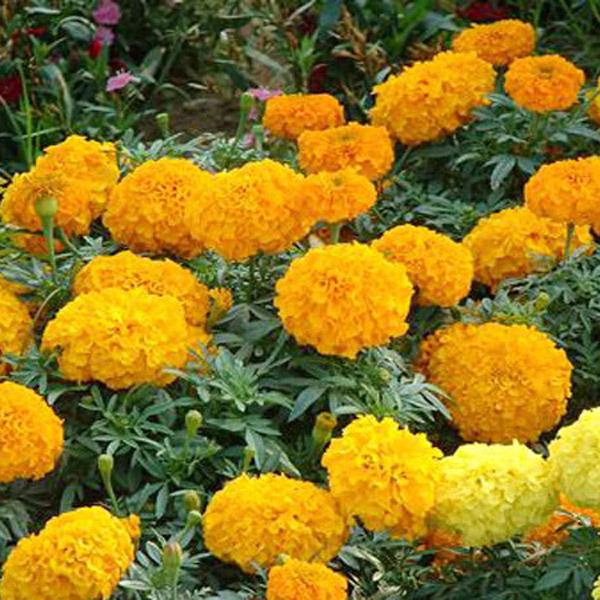 山东绿化花卉种植基地