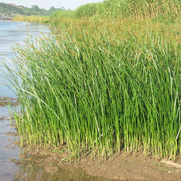 青州水生花卉基地谈花卉的生长习性