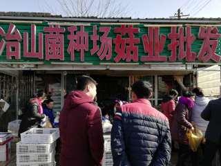 冶山菌种场菇业批发市场