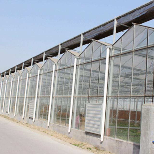 建造温室大棚应注意的四个要点