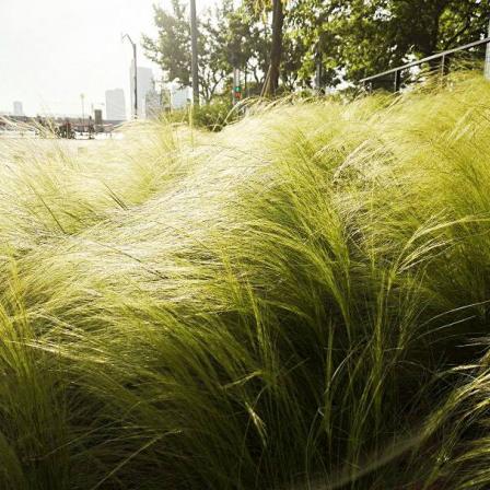 山东观赏草的种类有哪些