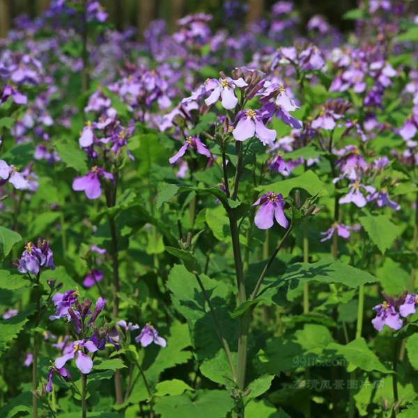 青州绿化花卉种植基地