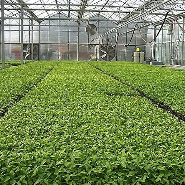 广西温室景观生态的绿化要求