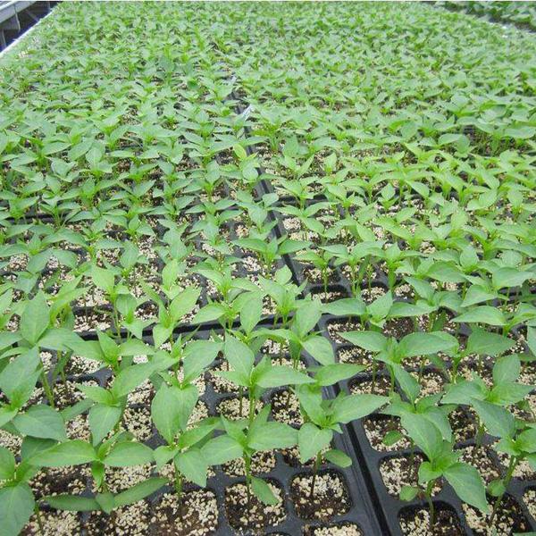 蔬菜育苗专用基质