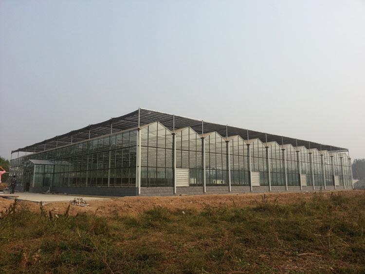 优良连栋温室选七洲温室 连栋温室建造