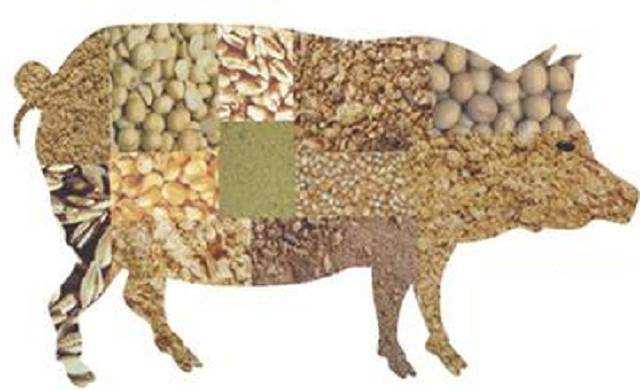 安顺优良的优饲8020仔猪浓缩料哪有卖-厂家批发银原生物饲料