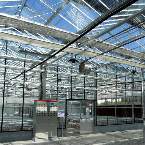 玻璃大棚厂家