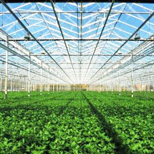 安徽高温蔬菜大棚建造