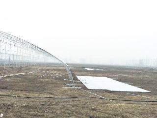 吉林智能连栋温室设计工程案例