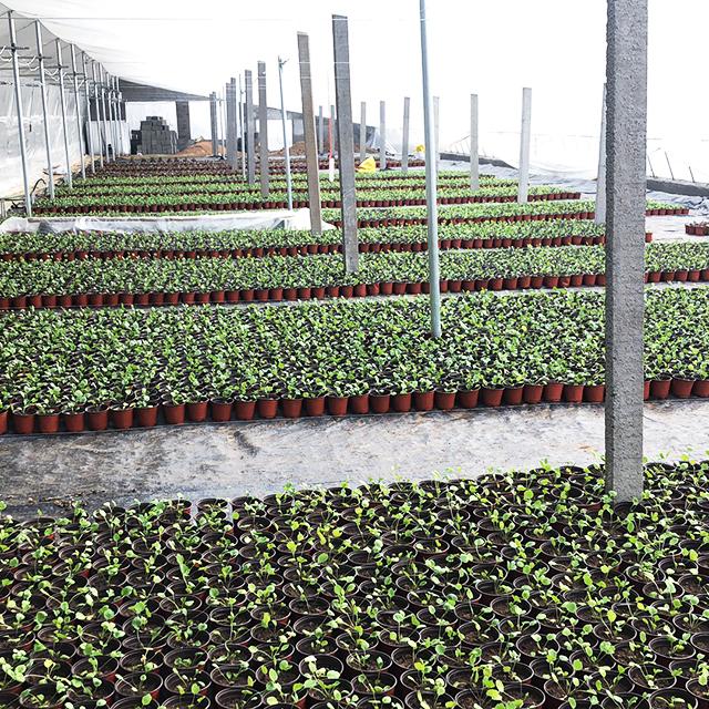 江苏花卉大棚种植基地