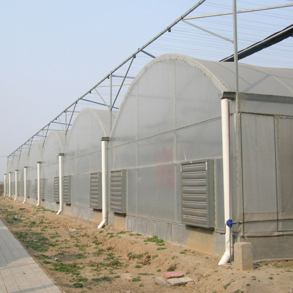 连栋薄膜温室