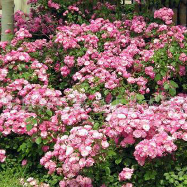 山东绿化花卉培育种植基地