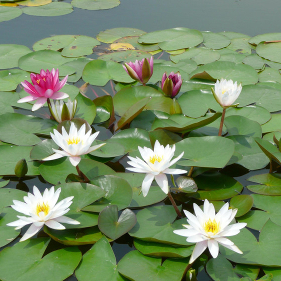 水质和水温对草花有什么影响