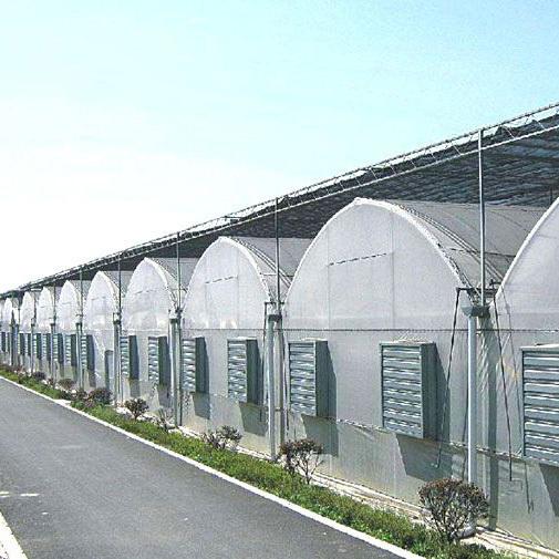 日光蔬菜大棚建造厂家
