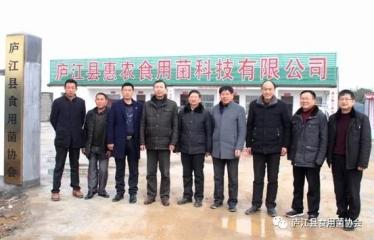 安徽省庐江县中发菌种场