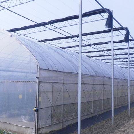 山东连栋薄膜温室建设案例