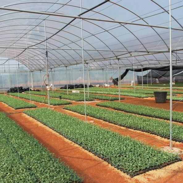 青州农业大棚建设