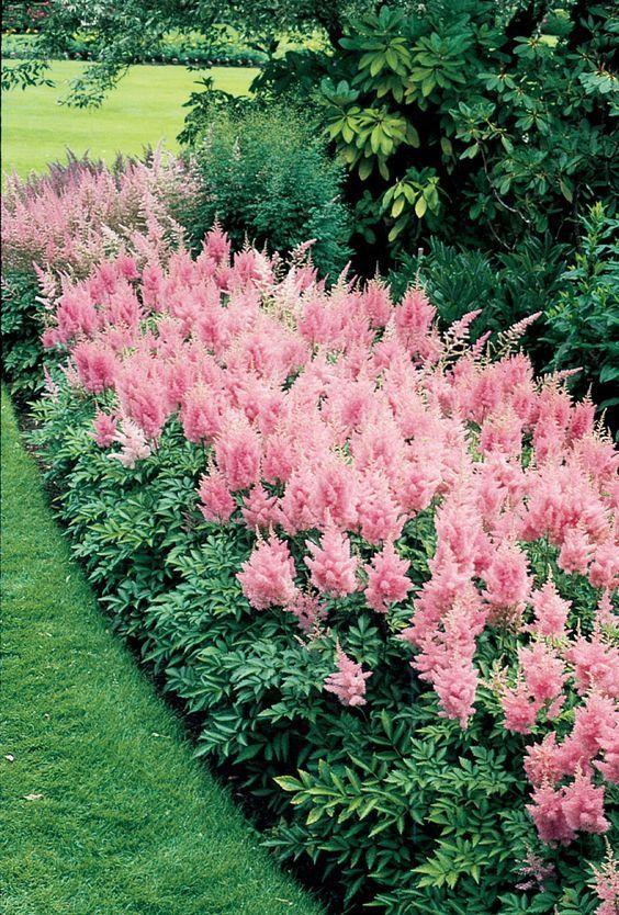 青州市北田共花海景观有限公司教你四季的各种花朵种植指南