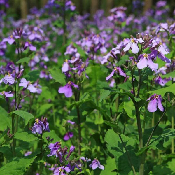 山东绿化花卉供应基地