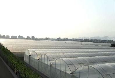 温室景观生态价格配件厂家:一品红的养殖方法和注意事项