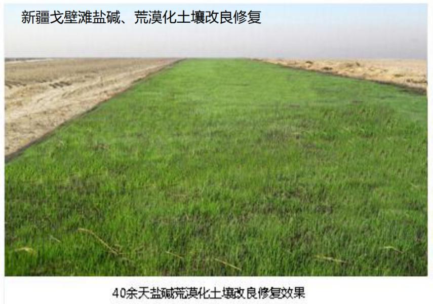 土壤勘察及修复—盐碱土壤改良