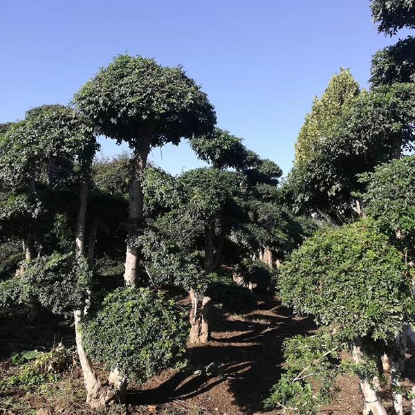 潍坊润丰园林科技发展有限公司