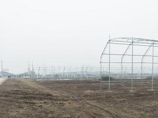 广西花卉大棚承建工程案例