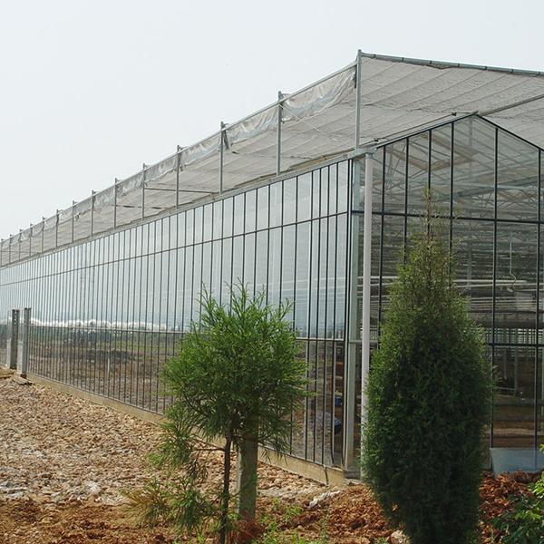 大型连栋温室