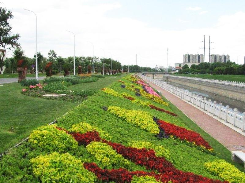 山东道路绿化苗