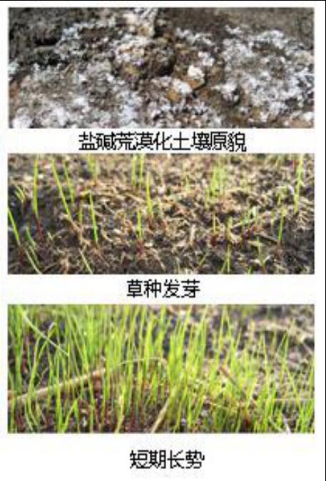 口碑好的土壤修复治理优选纳琦环保-如何选择土壤修复治理