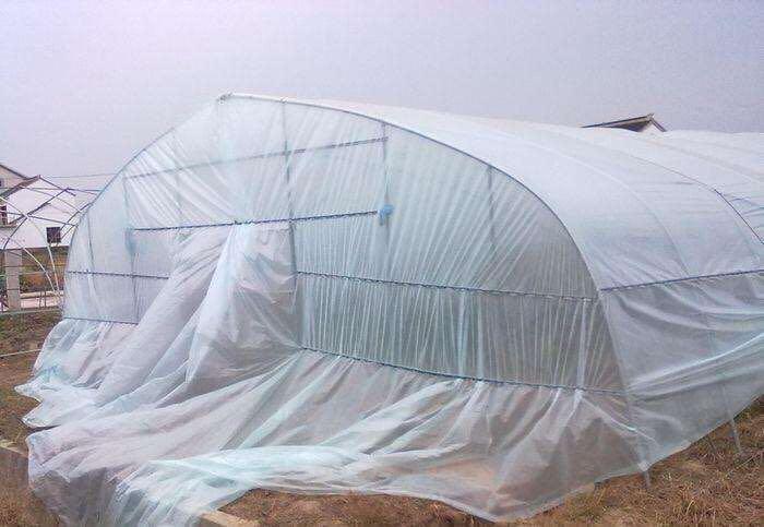 濰坊可靠的大棚農膜批發商推薦,新疆大棚農膜