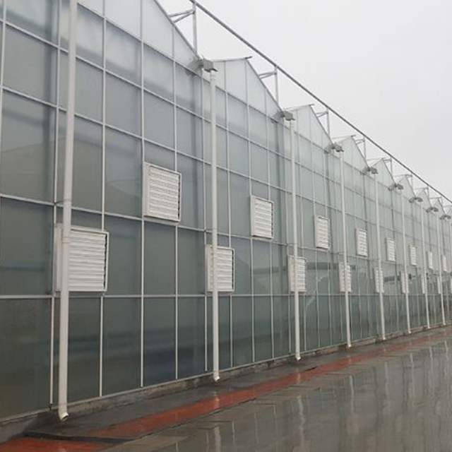 文洛阳光板温室