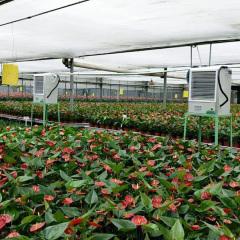 电热加温设备在花卉种植大棚的应用 (2)