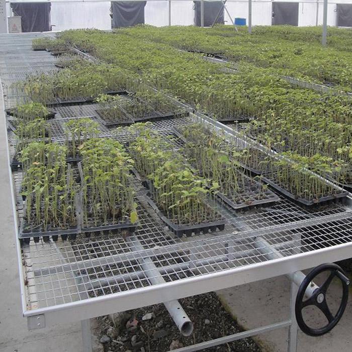 山西花卉温室建造商