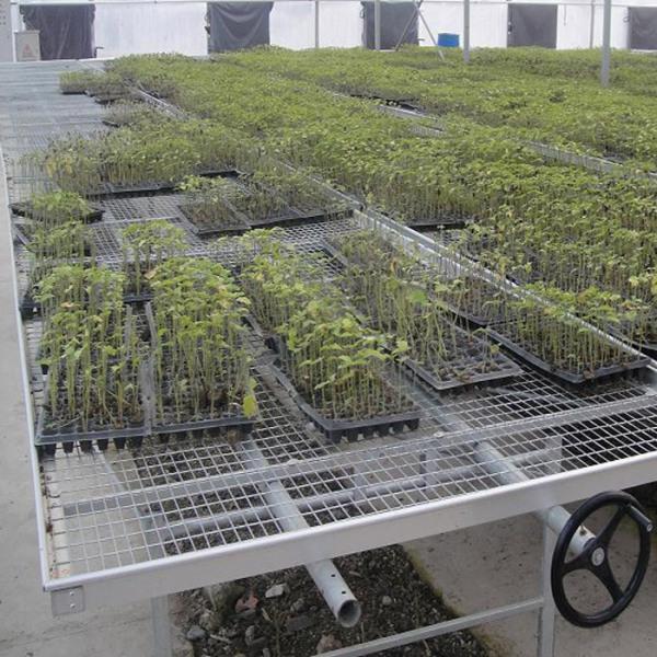 山东花卉温室建造商