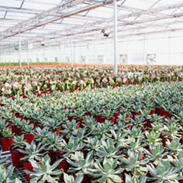 蔬菜花卉温室常见的采暖系统